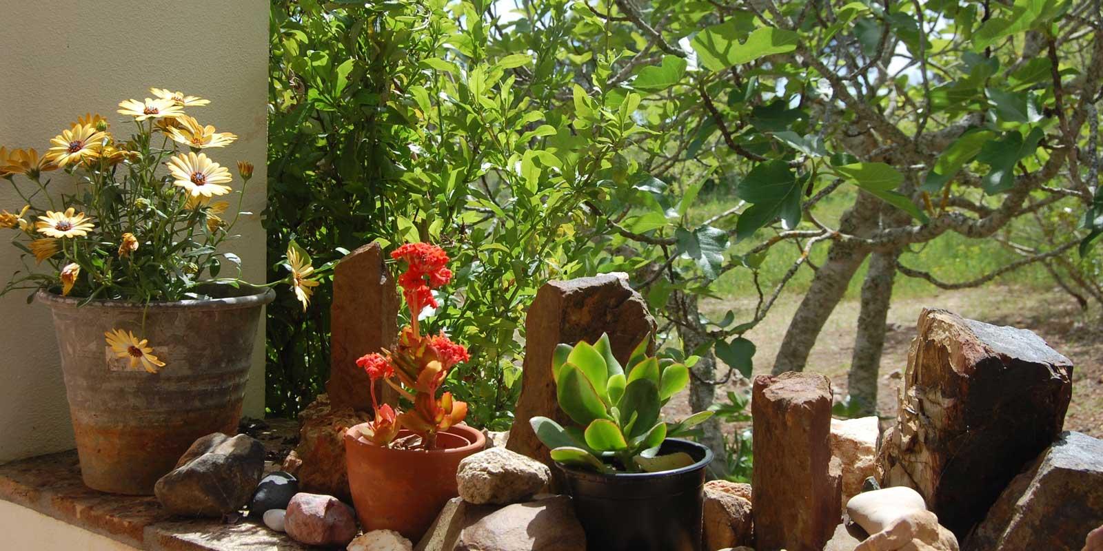 Groene planten in het vakantiehuis